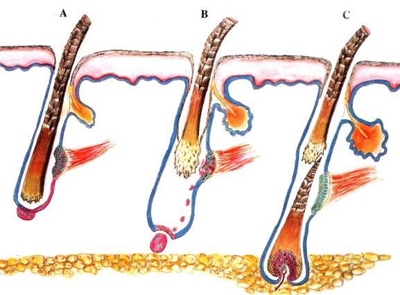 fasi-di-crescita-capello